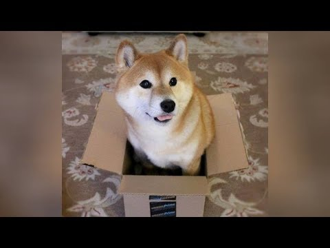 BEST DOG videos you've EVER SEEN – Funny DOG videos