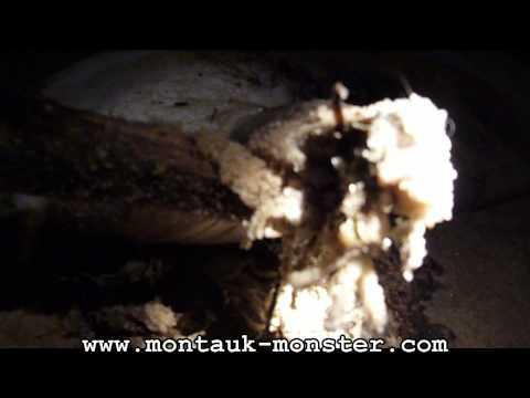 Monstruo de Montauk encontrado en Nueva York en 2009