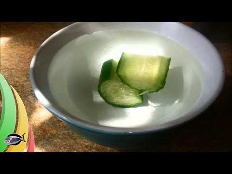 How to: make Cucumber sink in your Aquarium fish tank