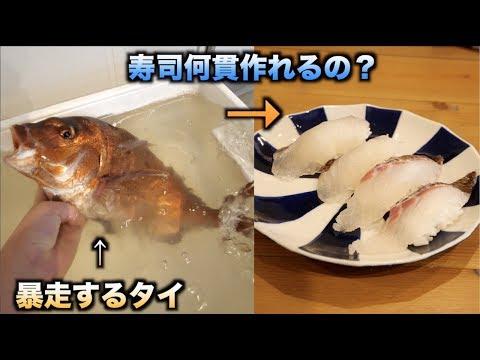 大暴走!!1.5kgのタイ一匹で寿司何貫握れるの?