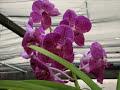 Um otimo lugar pra cultivar orquideas, pois la existe muito carinho e dedicação!