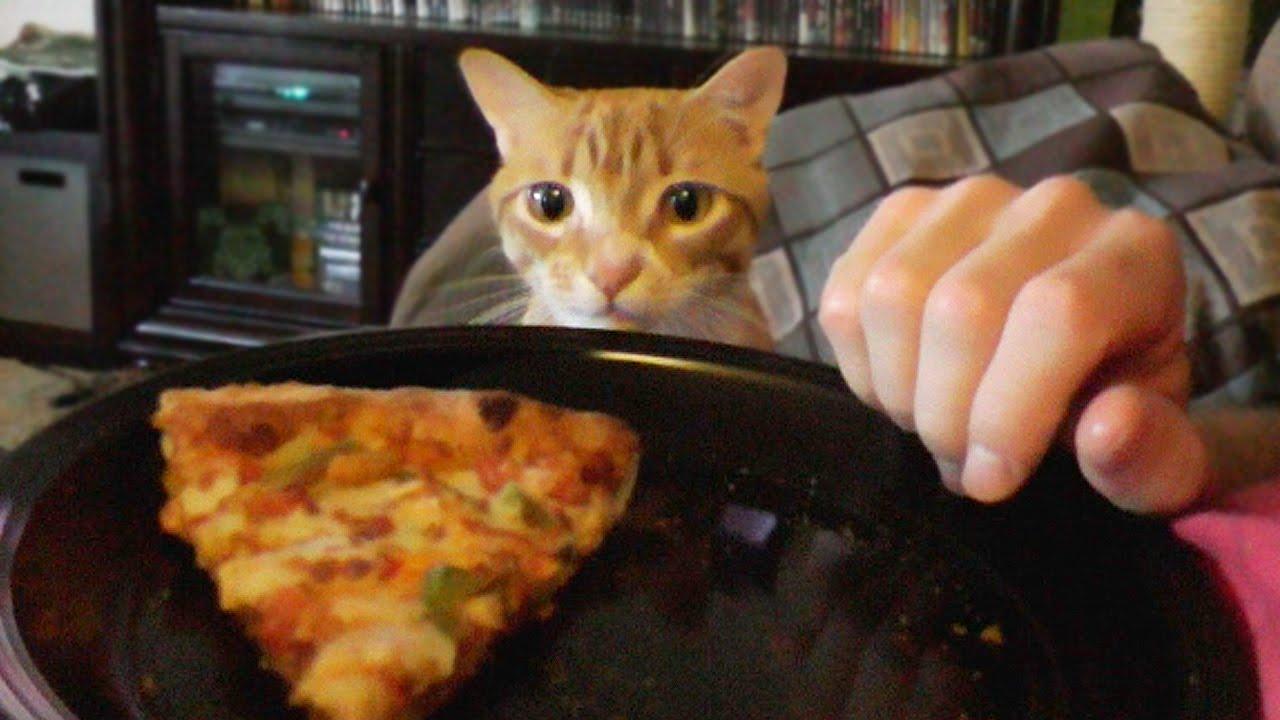 Kad mačak hoće da otme hranu