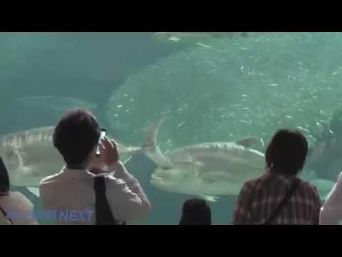 須磨海浜水族園でイワシ玉を展示