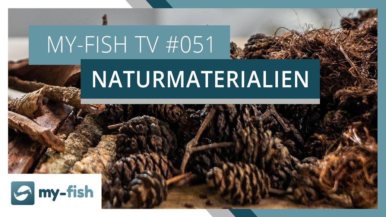 my-fish TV - Deine Nr. 1 Anlaufstelle für alle Themen rund um die Aquaristik 13
