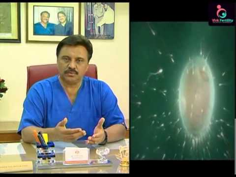 natural IVF clinics   IVF clinics in bangalore