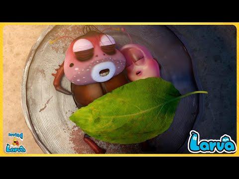 Larva Cheese ( Season 3) Cartoons - Comics 🍚 LARVA Full Episodes 🍨 New Animation Movies 2020