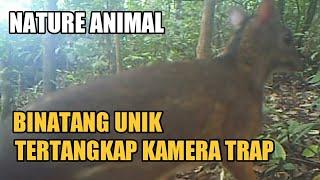 Download Video Binatang Unik Tertangkap Camera Trap MP3 3GP MP4