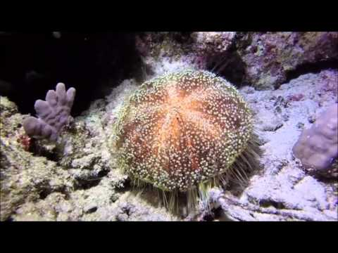 Diving in Marsa Alam by Adam F