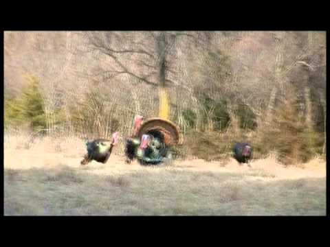 Funny Turkey Hunt – Turkey Hunting In Nebraska – Turkey Hunting Bloopers