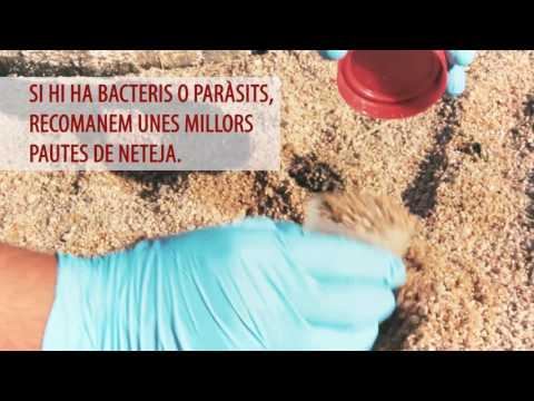 Mantenir la higiene de les sorres i els serveis de les platges