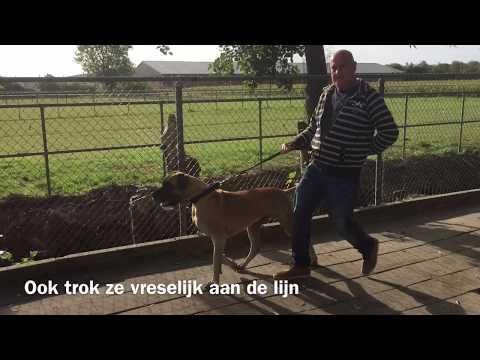 Anniek Winters hondengedragsdeskundige | Puck sleept baasjes mee
