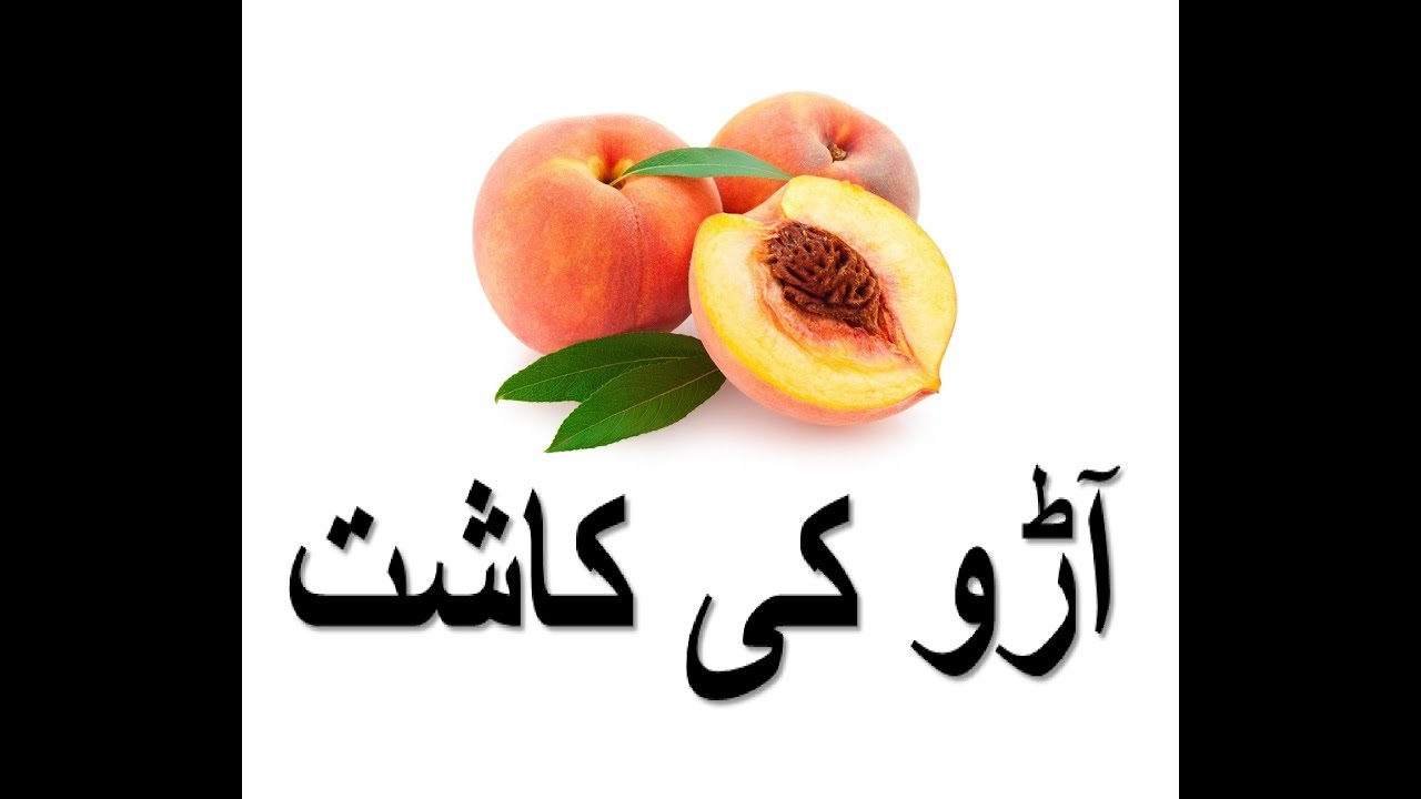 Aaroo ki kashat – آڑو کی کاشت - Peach Cultivation | Bakhabar Kissan
