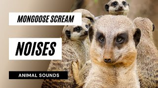 Watch Mongoose videos online