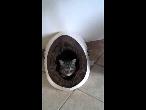 guardate cosa si inventa per non uscire di casa questo bel gattone.