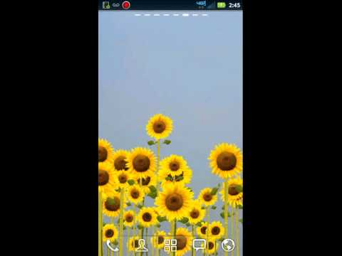 Video of ♥ Sunflowers Live Wallpaper