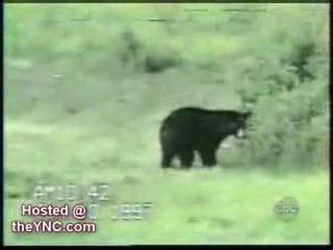 Bear vs. Cat Videos.