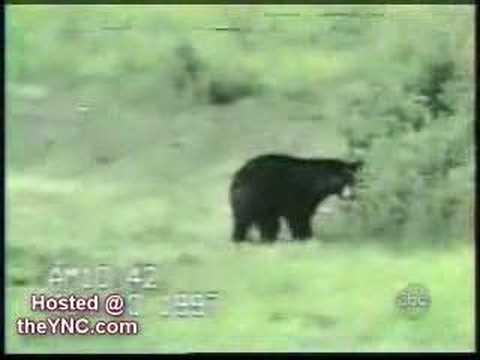 Bear vs. Cat Videos.