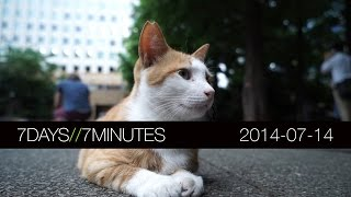 7 Days 7 Minutes (2014-07-14) CATS! Sony A7S, Epic Lightning and more...