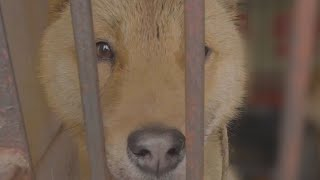 Exposed: Asia's dog and cat meat trade by The Humane Society of the United States