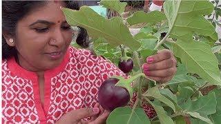 COOKING FARM FRESH STUFFED  BRINJAL RECIPE  BADANEKAYI  ENGAYI  HEALTHY VILLAGE FOOD