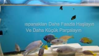 giffA5aDRTA