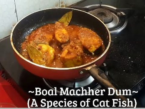 Video ~Recipe for Boal Machher (A Species of Cat Fish) Dum~ By Suvra Sen download in MP3, 3GP, MP4, WEBM, AVI, FLV January 2017