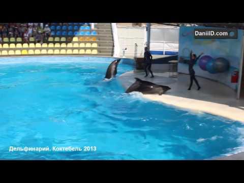 Крым, Коктебель 2013. В Дельфинарий всей семьей.