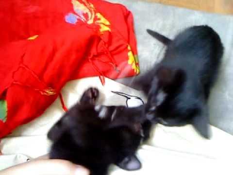 Tichat et Niña, tous petits chatons !!