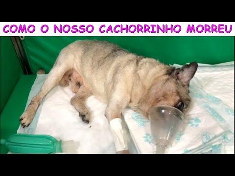 COMO O NOSSO CACHORRINHO MORREU