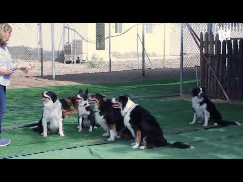 Video: Oman's own 'hotel for dogs'