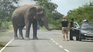 Video Wild elephant waiting for food ! MP3, 3GP, MP4, WEBM, AVI, FLV Agustus 2019