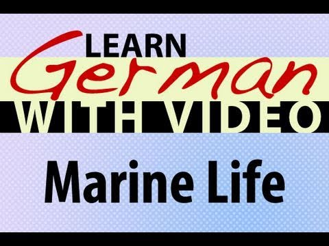 Learn German with Video – Marine Life