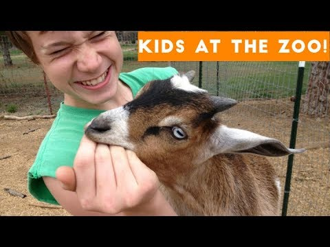 Video Compilation: Kids Visiting the Zoo