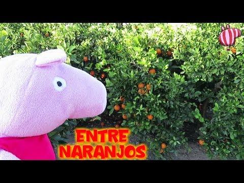 Peppa Pig entre naranjos y George come fruta  Vídeos de Peppa Pig en español