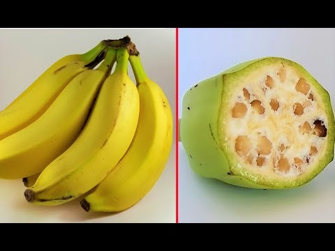 10 Foods That Used to Look Totally Different
