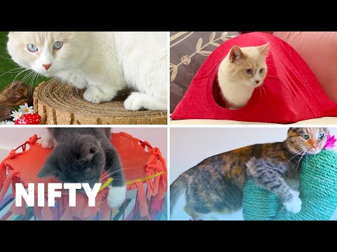 5 Adorable DIY Projects For Your Cat