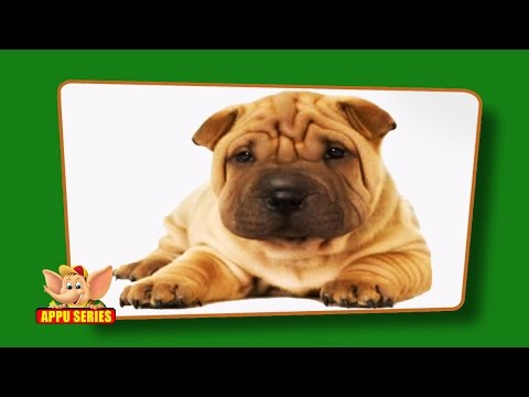 Flashcards for kids - Domestic Animals