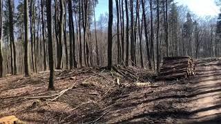 Jakby się ktoś pytał dlaczego do lasów nie można wchodzić…Są wycinane!