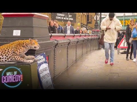 Hauska pila kadulla säikyttelee ihmisiä – Leopard Prank
