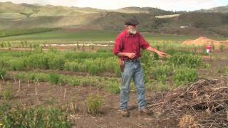 This second video in this series is a continuation of a tour of Agroforestry systems with Michael Pilarski, Skeeter of Friends of the Trees Society. In this video and ...