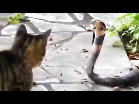 10 НЕУСТРАШИМЫХ ЖИВОТНЫХ (видео)