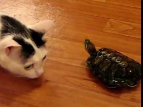 Черепаха vs кот (crazy turtle)