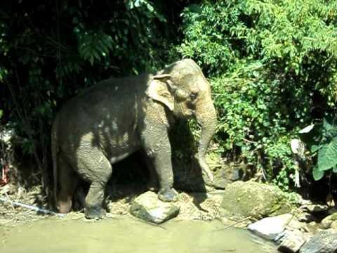 elefante em salete