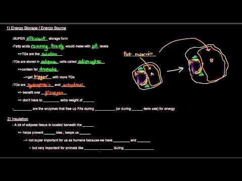 Lipids (Part 4 of 11) - Triacylglycerols / Triglycerides