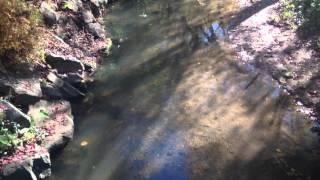 Les truites de la Tiretaine ne sont pas présentes que sur le parcours amont de la Tiretaine (entre la Font de l'Arbre et Royat). On peut avoir facilement un aperçu de la population piscicole de la Tiretaine au niveau de Chamalières dans le parc Beaulieu.
