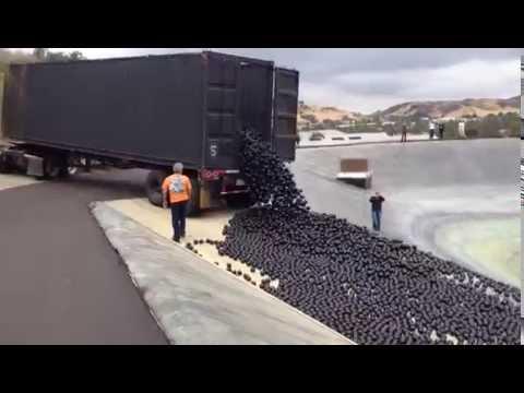 scaricano milioni di palline di plastica nell'acqua per salvare la fauna