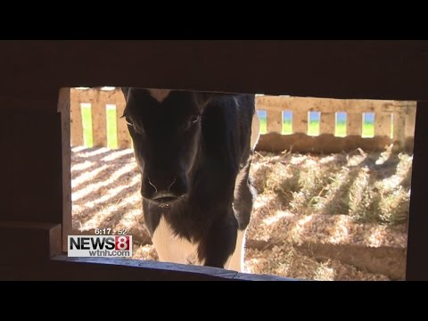 Dairy farmers deal with drought