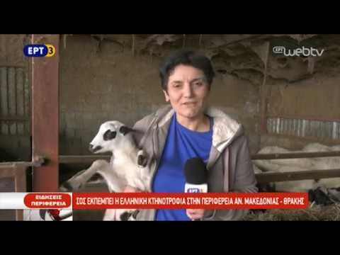 Σήμα κινδύνου από τους κτηνοτρόφους της Ροδόπης  | 12/10/2018 | ΕΡΤ