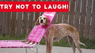 Brand new weekly theme compilation where we challenge you to Try Not To Laugh at these Funny Animals. Check out Team Internet's A Westworld Christmas ► https://www.youtube.com/watch?v=ryjrijObMk0&t=1sSend us a link to your video if you would like to see it in one of our compilations.https://docs.google.com/forms/d/1sR5Y6PyFGOpIMp6-j6XDAH3J07naG4ruRAfXyTOWZRE/viewform?c=0&w=1Check out more Funny Dog Videos ► https://www.youtube.com/watch?v=7zZU-5uPHdQ&list=PLf6Ove6NWsVcM75fCjLk3i-9IkpCmPyXw&index=3Funny Cat Videos ► https://www.youtube.com/watch?v=BoM9-bXzDjk&list=PLf6Ove6NWsVeM5MOVs_Yzj3AsV41DfQ9R&index=1Click here to Subscribe ► https://www.youtube.com/user/tailsnfails?sub_confirmation=1Welcome to Funny Pet Videos, a channel dedicated to cute, fluffy cats and curious, rambunctious dogs. We are here to fill your life with more furry and funny things the adorable friends in our lives do. Every Thursday, Friday, Saturday and Sunday we'll have a new compilation of the funniest home videos of cats, dogs, birds and all kids of animals being equally hilarious and adorable. Be sure the Subscribe to our channel to never miss one! So sit back, relax and have a laugh on us. For licensing information contact us at licensing@collabcreators.com. We'd love to have your furry friend on our channel!