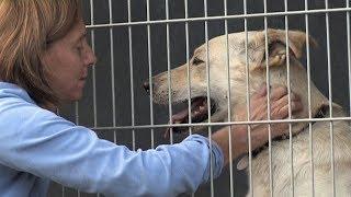 Městský útulek pro opuštěné psy v Mohelnici